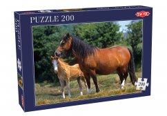 Horses, 200 palaa