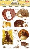Scraps: Cats