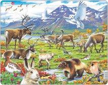 Larsen Arktinen sisämaa (Maxi)
