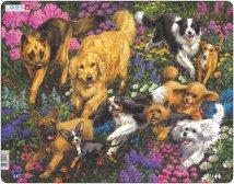 Larsen Koirat kukkakedolla (Maxi)